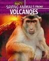 Saving animals from volcanoes