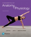 Product Fundamentals of Anatomy & Physiology