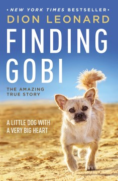 Product Finding Gobi: A Little Dog With a Very Big Heart