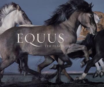 Product Equus