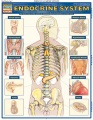 Product Endocrine System