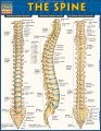 Product The Spine
