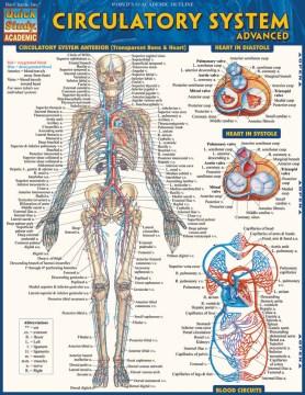 Product Circulatory System Advanced