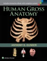 Product Human Gross Anatomy
