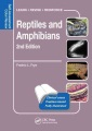 Product Reptiles and Amphibians