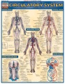 Product Circulatory System Reference Guide