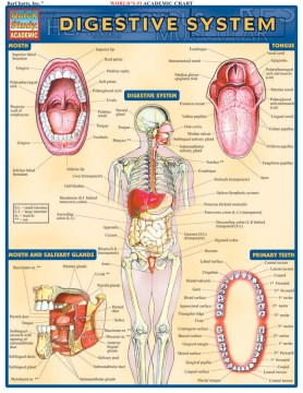 Product Digestive System Reference Guide