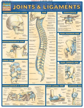 Product Joints and Ligaments