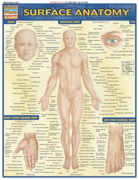 Product Surface Anatomy Quick Reference Guide