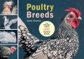 Product Poultry Breeds
