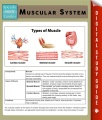 Product Muscular System