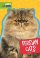 Product Persian Cats