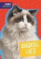 Product Ragdoll Cats