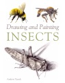 Product Drawing and Painting Insects