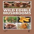 Product Wild Edible Mushrooms