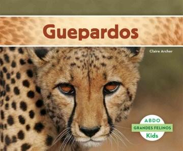 Guepardos / Cheetahs